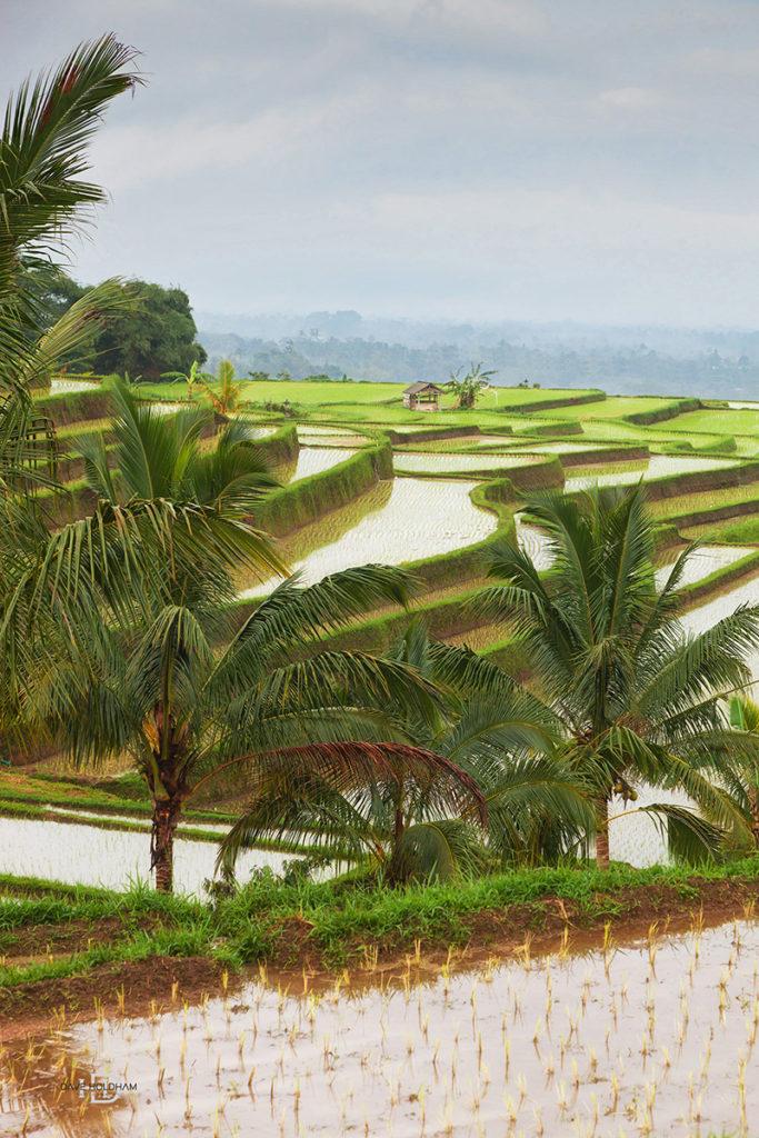 Amazing rice feilds of Bali World travel photography
