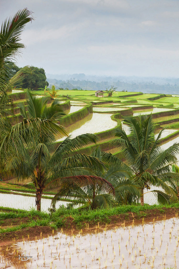 Amazing rice feilds of Bali World travel photography