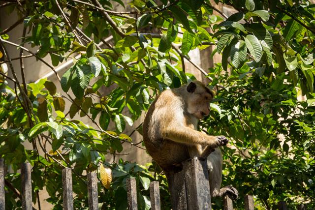 World travel Photos Sri Lanka